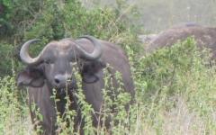 nairobi-national-park-c